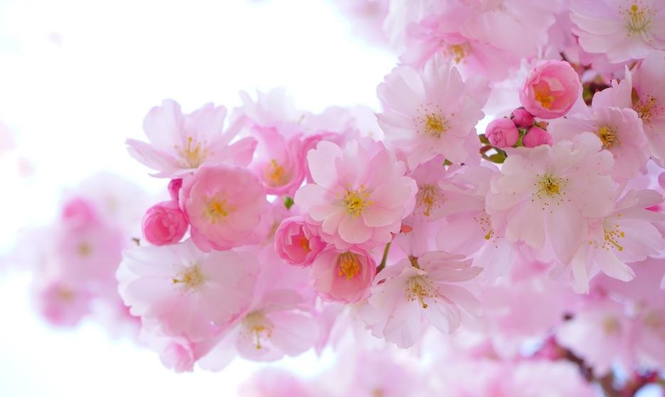 májové parfémy, kvetinové parfémy